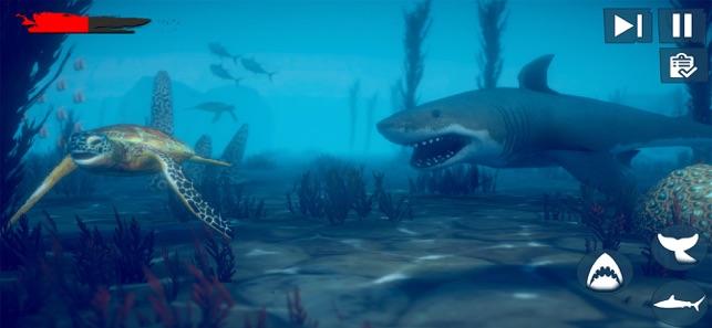筏生存水下的鲨鱼