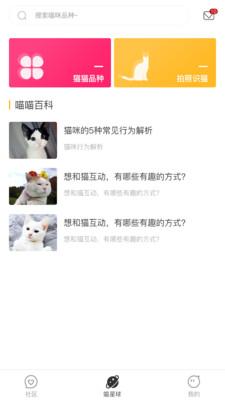 云养猫下载图1: