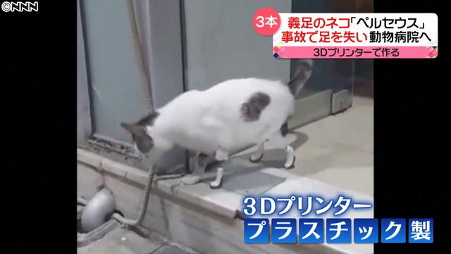 3D打印技术让你的宠物重新走路